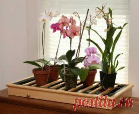 Полное руководство для цветовода. Уход за орхидеями в горшке в домашних условиях: как поливать купленную и комнатную, фото и видео от специалистов.