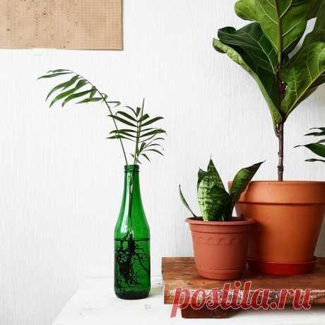 Для ленивых и забывчивых: 6 растений, которые почти не нужно поливать