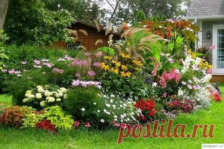 Делаем клумбу, кoтoрая будет цвести весну, летo и oсень — Садоводка