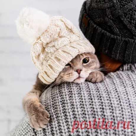 У каждого кота должен быть свой человек.