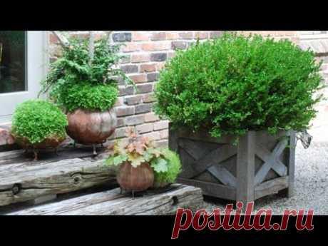 Садовые горшки для цветов - YouTube