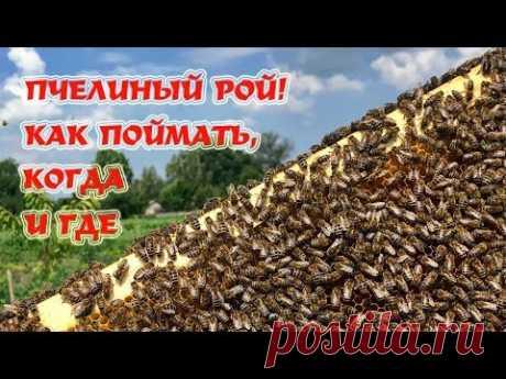 ЛОВЛЯ РОЁВ | Секреты установки ловушек.