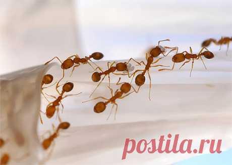 Способы борьбы с муравьями на огороде или в саду — Всегда в форме!