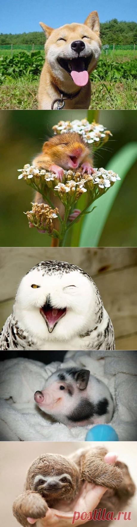 Заряд позитива: 20 самых нежных и искренних улыбок животных