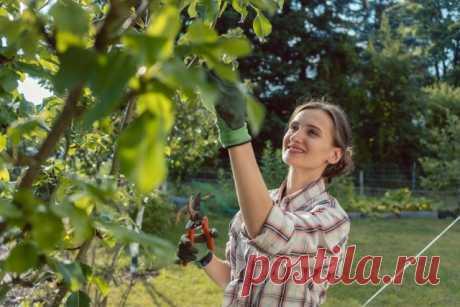 30 дел, которые надо сделать в саду, огороде и цветнике в июле | Новости (Огород.ru)