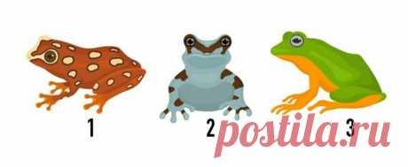Тест: Выберите лягушку и откройте свой путь к богатству   Скиталец   Яндекс Дзен