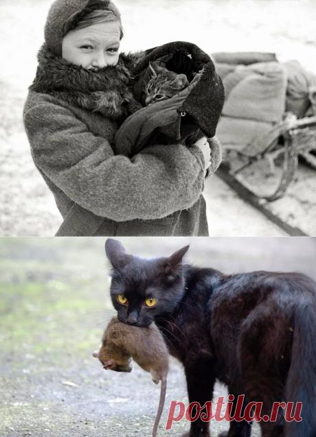 Война. Голод. Холод. Дети болеют. Мама стала заглядываться на кошку. | ЛюбовьОнаТакая | Яндекс Дзен