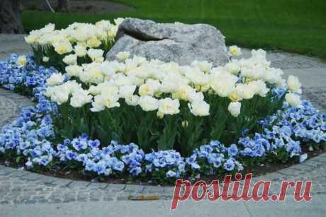 Как рассадить цветы на клумбе, чтобы они гармонично сочетались