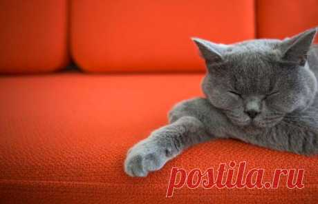 Как избавиться от запаха кошачьей мочи в квартире: народные способы и обзор средств