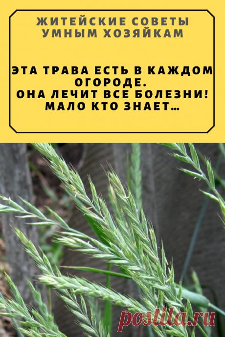Эта трава есть в каждом огороде. Она лечит все болезни! Мало кто знает… | Житейские Советы