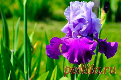 El iris del papel ondulado. | HandMade el blog