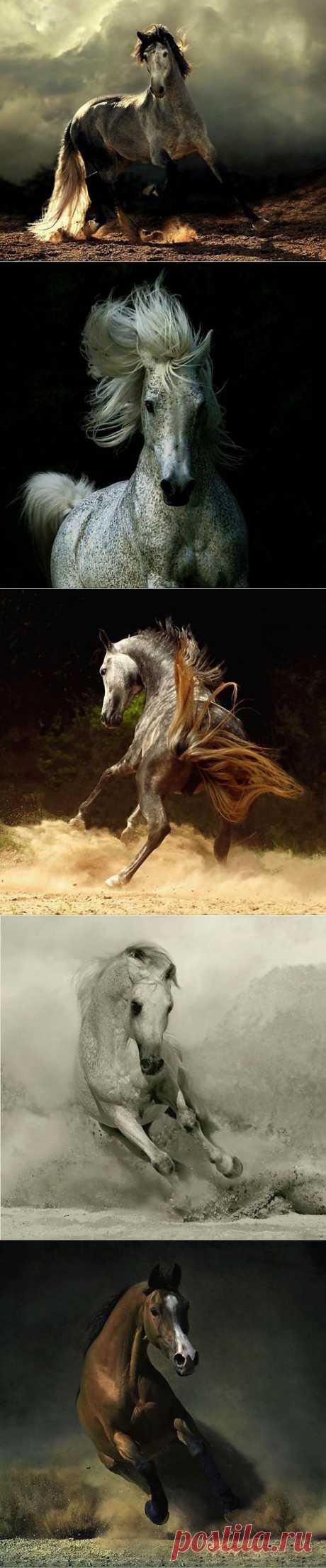 Красота и грация лошадей...