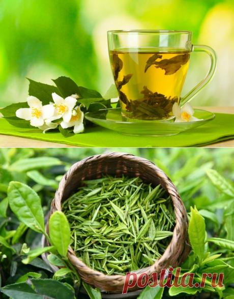 Как правильно заваривать зеленый чай: рецепты, советы