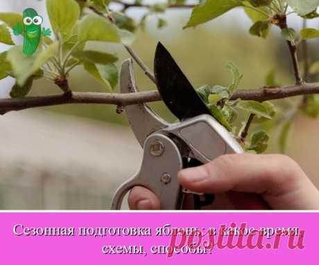 Обрезка яблони в осенний период – полезная процедура, обеспечивающая хороший урожай и здоровый сад.   OK.RU