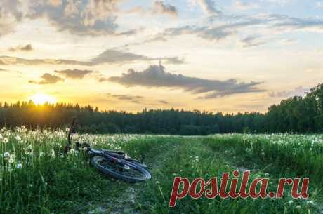 Поле одуванчиков около посёлка Новосельцево, Московская область. Автор фото: Саша Королев.