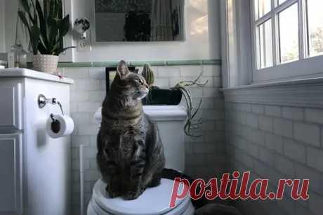 Никаких чудес: как приучить кота к унитазу - Ушки-хвостики - медиаплатформа МирТесен