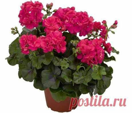 (+1) - 5 растений для дома эффективно очищающих воздух | УЮТНЫЙ ДОМ | советы