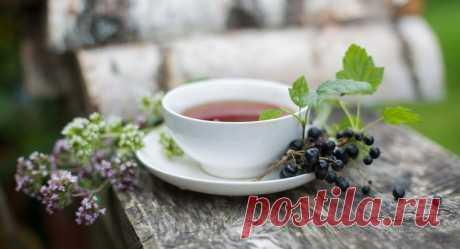 Очищающие чаи для выведения токсинов и шлаков