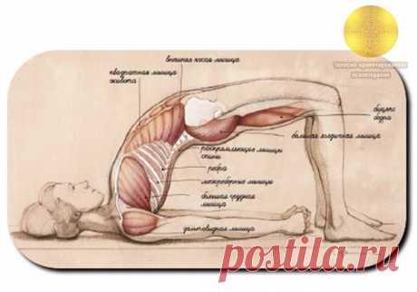 ПОЗА ДЛЯ ЗДОРОВЬЯ ПОЗВОНОЧНИКА И СПИНЫ.  Сету Бандха Сарвангасана (поза Построения моста) укрепляет заднюю поверхность и раскрывает переднюю часть тела. Поза укрепляет тыльную часть шеи, что делает ее эффективной подготовкой к Сарвангасане (Стойке на плечах) и отличной практикой для сохранения спины в хорошей форме. На пути построения изящной асаны стоят три физические ограничения: отсутствие гибкости в передней части тела, жесткость мышц шеи или травма шеи, слабость задне...