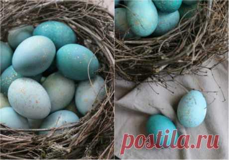 Сказочная краска для яиц: ни за что не догадаешься из чего сделан этот краситель