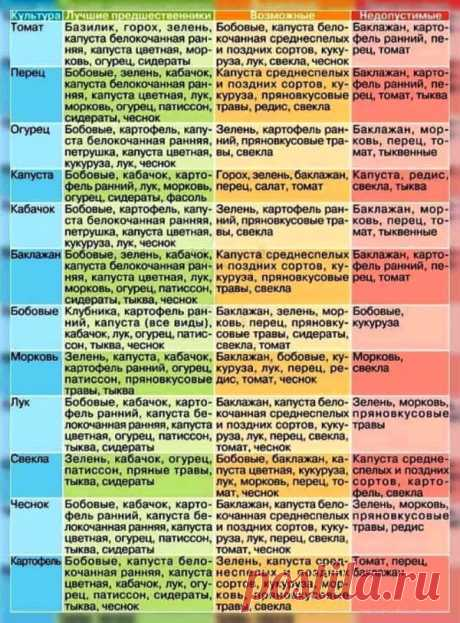 Совместимость овощных культур / Садоводство, дача / Сад, огород, растения... / Pinme.ru