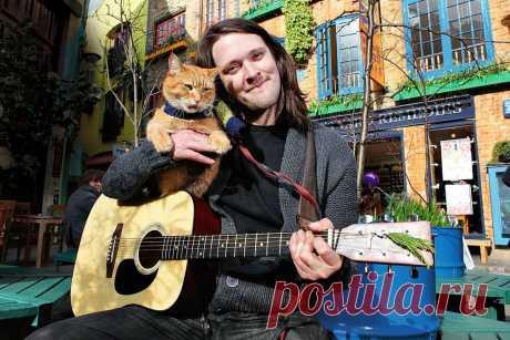 Бездомный кот круто изменил жизнь уличного музыканта и наркомана   О кошках и не только   Яндекс Дзен