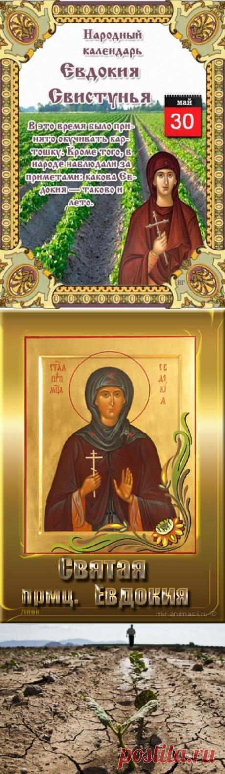 30 мая - Народно-христианский праздник Евдокия Свистунья.