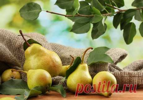 Как посадить грушу, чтобы быстро получить урожай — Садоводка
