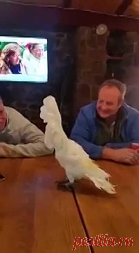 Попугай танцует Despacito! Вот молодец!