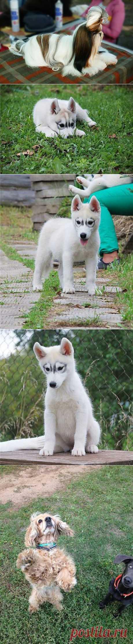популярные фото собак