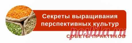 Секреты успешного подворья: основные ориентиры для молодых птицеводов | agrobook.ru