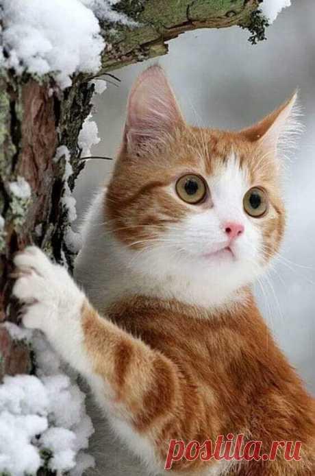 Зима катит глаза.... ________________________ Доброе утро, друзья!..))