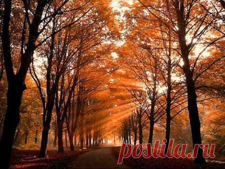 Осенний свет - YouTube