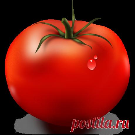 Los queridos más sabrosos, … Mi experiencia de la cultivación de los tomates
