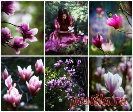 Молчу и тишине внимаю, я, молча, больше понимаю, я глубже чувствую в тиши желанья робкие души. Молчаньем, вдохновляясь, снова я понимаю ценность слова, и внемлю, внемлю тишине сама с собой наедине. Вспугнуть дыханием не смея, весну на солнечных аллеях.  = Лола Грей =