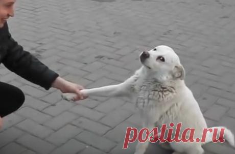 Замечательный бродячий пёс, который своим поведением растрогал мир ~