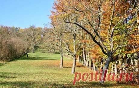 Подкормка плодовых деревьев осенью: самые популярные способы