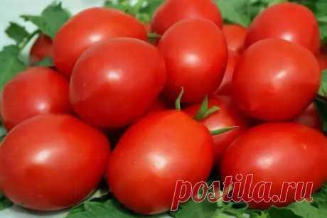 """Томат """"Валентина"""": описание сорта, характеристики плодов-помидор, фото-материалы"""