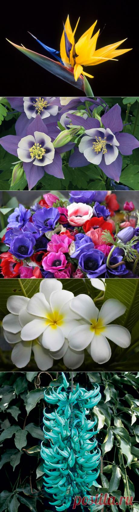 Мы постарались собрать в одном месте самые красивые, на наш взгляд цветы планеты. Конечно же, однозначно назвать какие-то растения красивее других - невозможно, поэтому мы постарались абстрагироваться от количества возможных факторов для оценивания и сосредоточились именно на внешней красоте и разнообразии цветов, как узнаваемых во всём мире, так и малоизвестных.