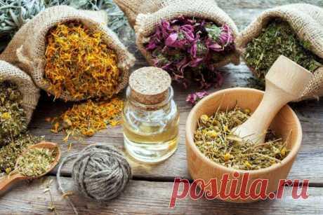 Желчегонные травы при застое желчи - список, описания и рецепты.