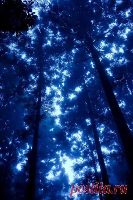 Обожаю синий цвет