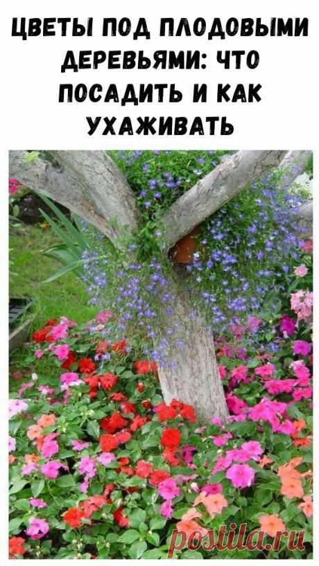 Цветы под плодовыми деревьями: что посадить и как ухаживать - Интересный блог