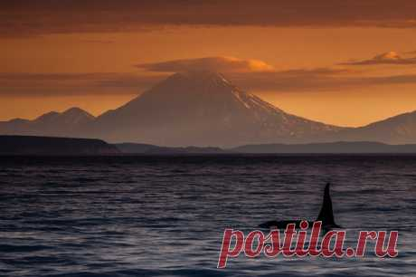 ""\""""To meet a killer whale at dawn moreover and with such landscape - inexpressible impression"""", – shares the photographer Igor Ivanko. Author's album: nat-geo.ru/photo/user/287749""460|306|?|en|2|c1b20d3f47f920907bcc21a39379085d|False|UNLIKELY|0.3196457624435425