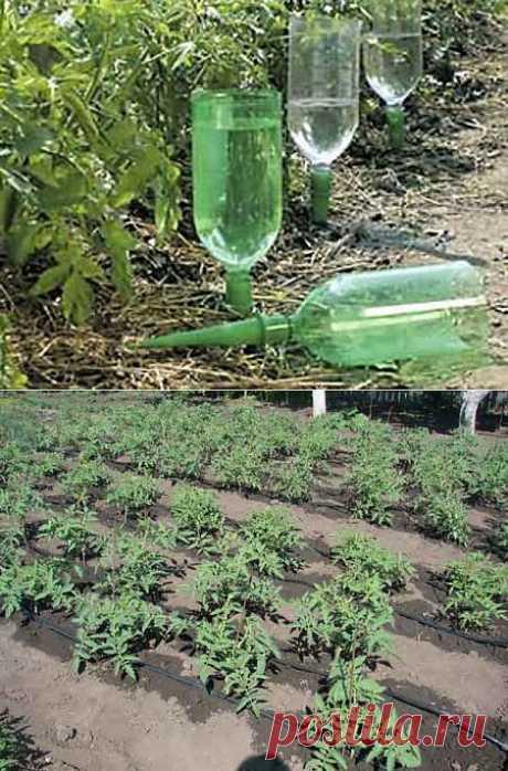4 способа полива огорода » Садовед