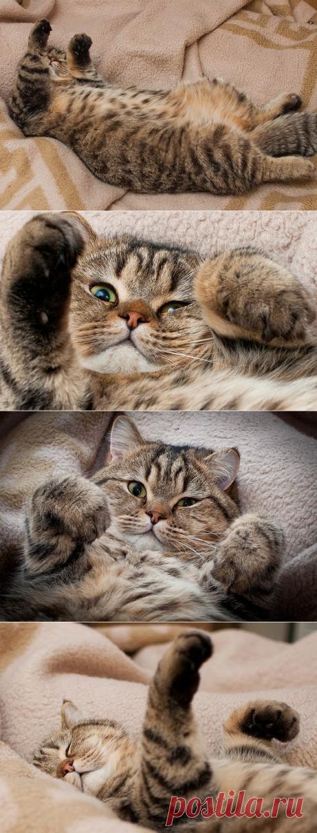 Тяжелый рабочий день кота
