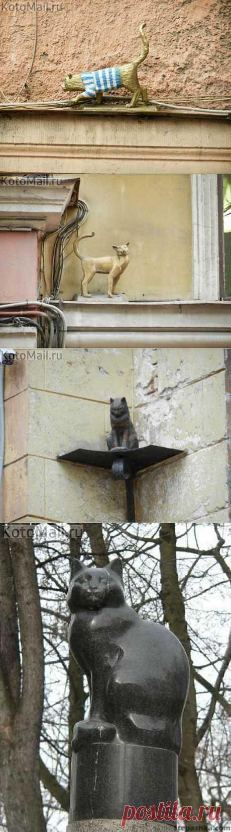 Питерские кошки | KotoMail.ru