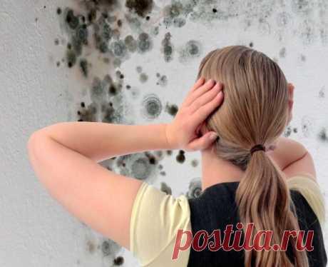 Плесень уйдет со стен навсегда. Простой и безвредный способ избавления от грибка. • Сияние Жизни