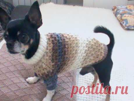 Вяжем свитер для маленькой собачки. Подробный мастер класс.