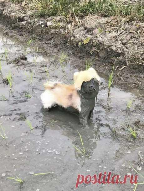 30 собак, чьи хозяева сильно пожалели, что отстегнули поводок Каждый владелец собаки знает, как трудно содержать питомца в чистоте. Как истинные охотники, наши четвероногие друзья стараются избавиться от своего запаха, даже если ради этого придется изваляться в …