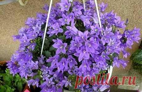 ¡Después de tal fertilización las flores de habitación crecen como la espuma! Cualquier planta de vez en cuando tiene necesidad de la fertilización correcta. Especialmente esto es actual en los períodos difíciles